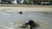 Допълнителна атракция привлича посетители по египетското крайбрежие