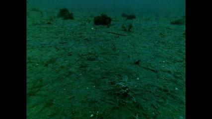Морски звезди пречат на риболов