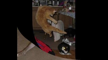 Няма такъв смях (кунг - фу котки)