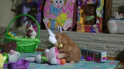 Сладко коте празнува Великден | Честит празник на всички !