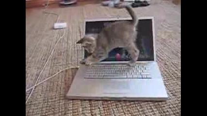 Коте С Лаптоп