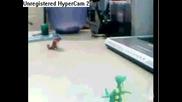 Pokemon Poarody