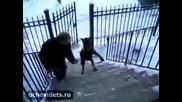 Куче Ходи Като Човек