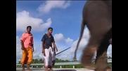 Слонове се разходиха по новооткрита магистрала в Шри Ланка