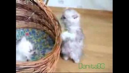 Най - Сладкото Коте