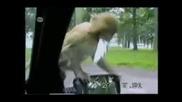 Смешни моменти с животни