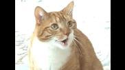 Говорещо Коте