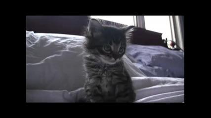 Любопитно, малко, сладко, коте