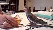 Папагал пие ракия