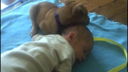 Малко кученце спи заедно с много сладко бебенце