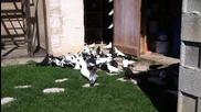 trenirovki na pazardjichki galabi