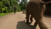 Сладко малко слонче се забавлява по кален хълм