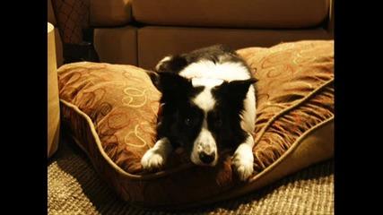 Оникс (кучето)