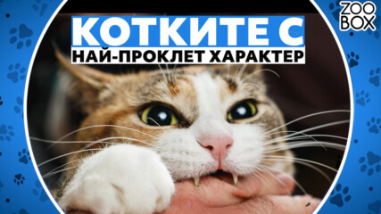 Породите котки с най-проклет характер