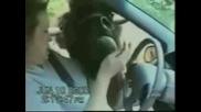 Гафове - Падания - Смешки