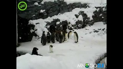 Превъзбуден пингвин