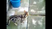 котката роко