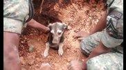 Хора Спасяват затрупано куче от Свлачище