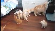 Tова беше истинска организирана група! Само вижте реакцията на тези котета, когато майка им изтропа!