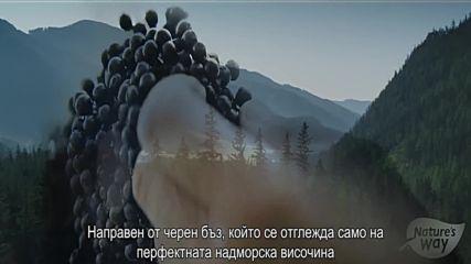 Самбукус на Nature's Way - реклама