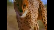 Най опасните животни от пустинята до саваната