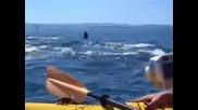 Хора на каяци сред китове убийци реално видео