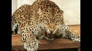 Любими Животни