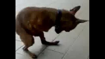 Куче Мастурбира.avi