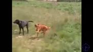 Dancing Techno Dog