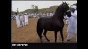 Na,dzapo,konia
