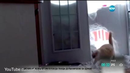 Може ли снегът да бъде препятствие за една котка?