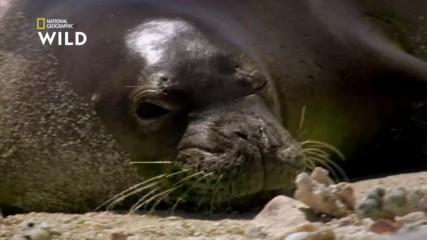 Тюленът монах