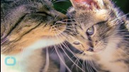 Cat That Adopted 3 Abandoned Kittens Is Now A Purr-Fectly Happy Mom