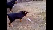 Ловни Кучета 2
