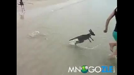 Малко кенгуру в морето