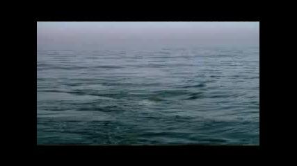 Бяла Акула