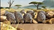 Смях с дебелите животни Как щяха да изглеждат животните ако ядяха в Макдоналдс