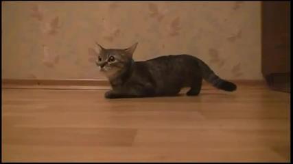 Коте С Бърз Старт - Смях