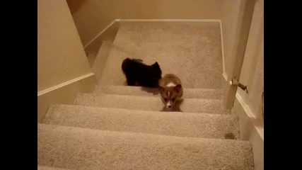 Кученце помага на Другарчето си!
