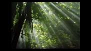 Nicholas Gunn - Kaibab Forest