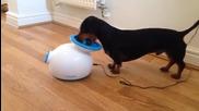Куче си играе самичко с машина за автоматично пускане на топки