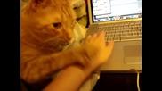 Котка не дава на стопанина си да пипа компютъра!