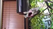Ядосан хамелеон атакува стопанинът си , нарушаващ спокойствието му