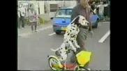 Куче кара колело.