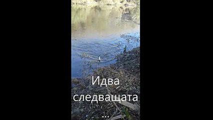 Спининг риболов на щука