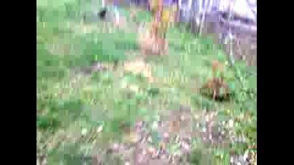 Видео0005