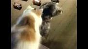 Котка и Куче - Смешна реклама