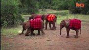 Слончета от Кения играят футбол