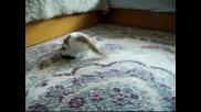 Малките Котенца На Фофо