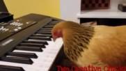Кокошка майстор на пианото!